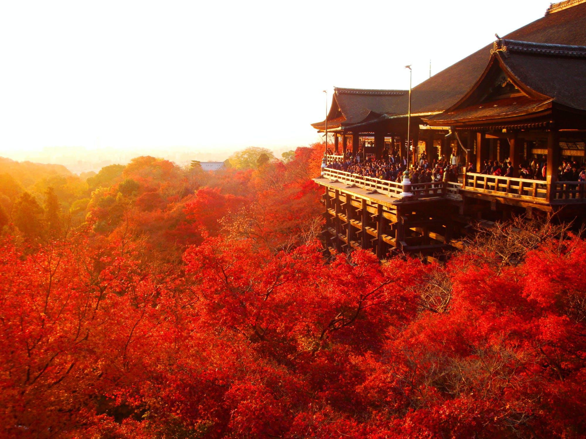 東福寺や嵐山、永観堂など人気の紅葉名所から、混雑を避けて紅葉を満喫できる穴場まで紅葉スポット20カ所を厳選!例年の見頃時期を元に、10月・11月・12月の月別で