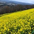 千葉県 マザー牧場
