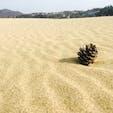 鳥取砂丘。 不思議な空間で、丘を登れば海もみえます。 風がつくる砂模様が綺麗。 次に行く時はパラグライダーしたい。