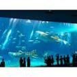沖縄 - 美ら海水族館
