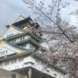 大阪城の桜です🌸