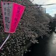 目黒川の花見は平日とは思えない人混みでしたσ(^_^;)