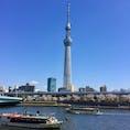 桜開花🌸 青空も美しい #スカイツリー #隅田川