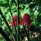 2018/12/24 #シンガポール #シンガポール植物園 #世界遺産 #不思議な花