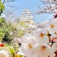 真っ白な姫路城とピンクの桜のコラボです😊