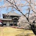 奈良。東大寺。桜満開