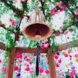 #花 #イルミネーション #名古屋 #愛知 #観光 #フラワースカイガーデン   #大名古屋ビルヂング の 期間限定「フラワースカイガーデン」へ行ってきました。  昼間は、綺麗な花がたくさん🌼 夜は、イルミネーションが綺麗です。  https://dainagoyabuilding.com/special/3rd_anniversary/