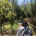 京都 嵐山 何気に初めての嵐山。 人力車も初めて乗ったよ。