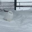 2017/12/23 #旭山動物園 #雪のなかでも