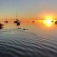 西オーストラリア モンキーマイア 朝日とイルカ