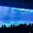 美ら海水族館。 ジンベエザメが圧巻。 入園料が安いと思うぐらいに楽しめる。 #美ら海水族館 #ジンベエザメ