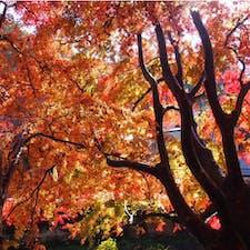 #高尾山 2016年11月  #紅葉 🍁の季節に登山して大正解◎ 真っ赤っ赤ですごく見応えがありました😊😊