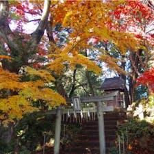 #高尾山 2016年11月  登山途中見かけた小さな神社⛩ 真っ赤も綺麗だけど赤と黄色のコントラストも良い😊💕