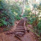 #高尾山 2016年11月  こういう手作り感ある道とか階段とか好きです😊💕 階段上るの大嫌いだけど、これならちょっと楽しいかも◎