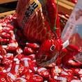 川越氷川神社の一年安鯛の鯛みくじ