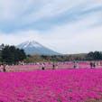 山梨(2019.5.3) 📸山梨県富士芝桜まつり 丁度、浜松駅でレンタカーしたら、凧揚げまつり?的なものも開催していた