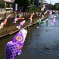 ▶︎栃木県*°栃木市  蔵の街として懐かしい街の面影が残る栃木市  5月ごろには川に沢山の鯉のぼりが飾られます。有料ですが小さな船に乗って鯉のぼりを眺めるのも粋でしょう✨  数駅先には、あしかがフラワーパークもあるのでオススメです🙌  川の付近は狭いながらに車も通る道ですので、写真を撮る際は安全に十分気をつけてください🦋