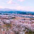 2019.03.17 群馬県の榛名梅林🌸 iPhone7なので画質悪いです😫😫 カメラには疎いので使いやすくて綺麗に撮れるカメラ欲しいです。。 #群馬県 #高崎市 #榛名梅林