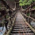 祖谷のかずら橋と奥祖谷の二重かずら橋と、両方巡ってきました。これは奥祖谷のほう。ワイヤーも使われてるし揺れはそこまでじゃなかったけど、足元の木の間隔がわりと空いていて、渡るのはなかなかのスリル。橋にしがみつきながらなんとか渡り切りました。