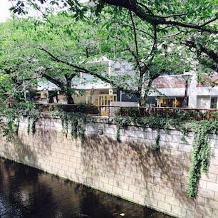 目黒川沿いの深緑  桜の頃もよいが、深緑の時は落ち着いていて、時間の流れがゆったりで、満喫出来る