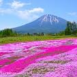 北海道倶知安町「三島さんの芝桜庭園」。名前からもわかるように、三島さんのご厚意で、ご自宅の芝桜を観光客向けに一般開放してくれているスポットです。今では倶知安町の花名所の1つとして、道民に親しまれています。5月下旬から6月上旬まで観賞できます🌸