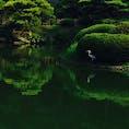 栗林公園です。 鷺がお休み中ー♬