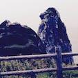 壱岐 猿岩 確かに 猿に見えるわ🐒