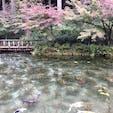 根道神社 名もなき池  通称 モネの池 です。