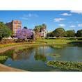 シドニーのビクトリアパーク。紫色の花、ジャカランダが綺麗でした。  #シドニー #公園