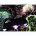 📍シンガポール ガーデンバイザベイの夜のショー  #シンガポール #ガーデンバイザベイ #Singapore #gardensbythebay