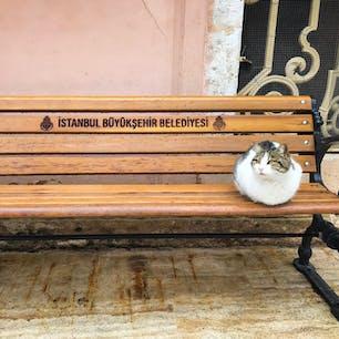 オルタキョイモスク前にいた猫さん。 (トルコ・イスタンブール)