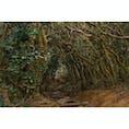 福岡県 〜トトロの森〜 芥屋の大門付近にある 木々のトンネル🌳 まるでジブリ「となりのトトロ」の ワンシーンにそっくりな場所です✨