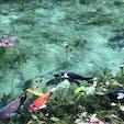 岐阜:モネの池