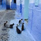 モロッコ シェフシャウエン 絵本の中の猫のよう