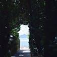 備瀬のフクギ並木🍃⛵️  並木の中は日陰で涼しく、 迷路のようになっており散策が楽しいです✨ カフェもあるので涼しくゆっくりと 休憩することが出来ます😊 ただ、蚊がけっこういたので虫除け対策は 万全にして行った方がいいです!  #沖縄 #フクギ並木 #パワースポット