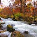 奥入瀬渓流の紅葉 近くの十和田湖湖畔の紅葉も素敵 いつか新緑もみてみたい #青森県 #奥入瀬渓流
