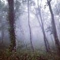 世界遺産、白神山地のブナ林 幻想的な世界が広がっていた #白神山地 #秋田県