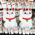 豪徳寺の招き猫!  一昨年くらいに一度来た事があったけど、また招き猫さん達を拝みたくて◎招き猫発祥の地とされているらしく、相変わらずいたるところに猫様が。ここで招き猫さんのお力を頂戴して明日も仕事頑張る(^○^)  2019.7/28
