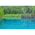 夏の青い池。完璧なリフレクション。