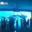 日本でシャチが見られる貴重な水族館。ジャニーズコンサートのようなイルカショーも必見 #名古屋港水族館