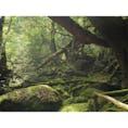 鹿児島:屋久島 苔むす森