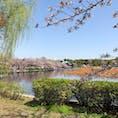 上野恩賜公園・不忍池と桜🌸 #上野公園 #桜 #お花見