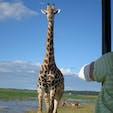 チョベ国立公園 運がいいとこんな距離で動物に遭遇できます。
