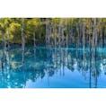 美瑛・青い池。 完璧なリフレクションを見たければ、風が凪いでいる早朝に行くのが良いです。ただし、高確率で池の上に落ち葉が浮いています。  何時の青い池がベストか、美瑛の写真家たちとお酒飲みながらワイワイやってたのもいい思い出。
