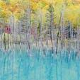 北海道 美瑛・青い池 10月初旬