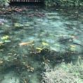 岐阜県関市の『名も無き池』(通称:モネの池)