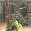 名古屋の東山動物園。 3月来園時、コアラの赤ちゃん発見!