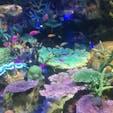 池袋のサンシャイン水族館🐟