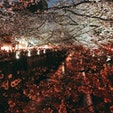 目黒川で夜桜を満喫😚 4月から環境がガラリと変わったけど、目の前にあることをスピーディーかつ丁寧に対応していくのみ。