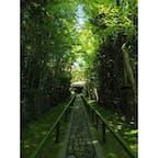 京都祭り:高桐院